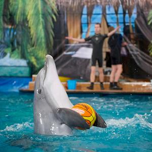 Дельфинарии, океанариумы Елабуги