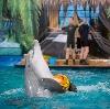 Дельфинарии, океанариумы в Елабуге